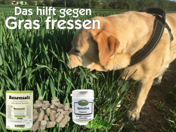 Das_hilft_gegen_Gras_fressen