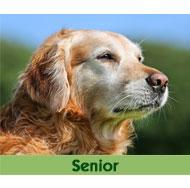 Hundefutter-Senior-Max-Hamster