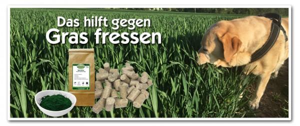 Das-hilft-gegen-Gras-fressen-neu