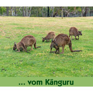 Leckerlies-vom-Kaenguru