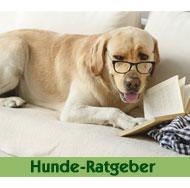 Hunde-Ratgeber-Max-Hamster
